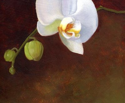 white orchid branch flower still life